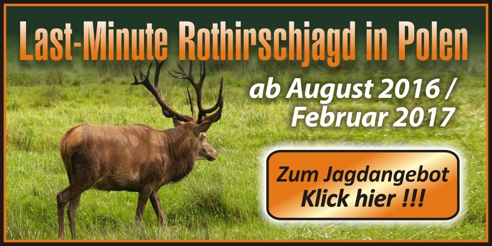 Banner-Last-Minute-Jagd-Rothirsch-2016_2017